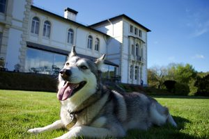 Dog friendly place to stay in Mid Wales
