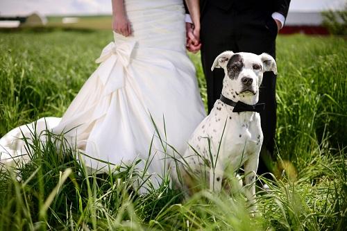 A guide to organising a dog-friendly wedding