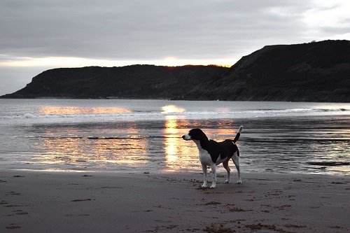 Find a dog friendly hotel with plenty of opportunities for walking, preferably with a dog friendly beach nearby.