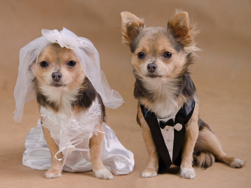 Let your pooch take centre stage in some of the photos at your dog friendly wedding