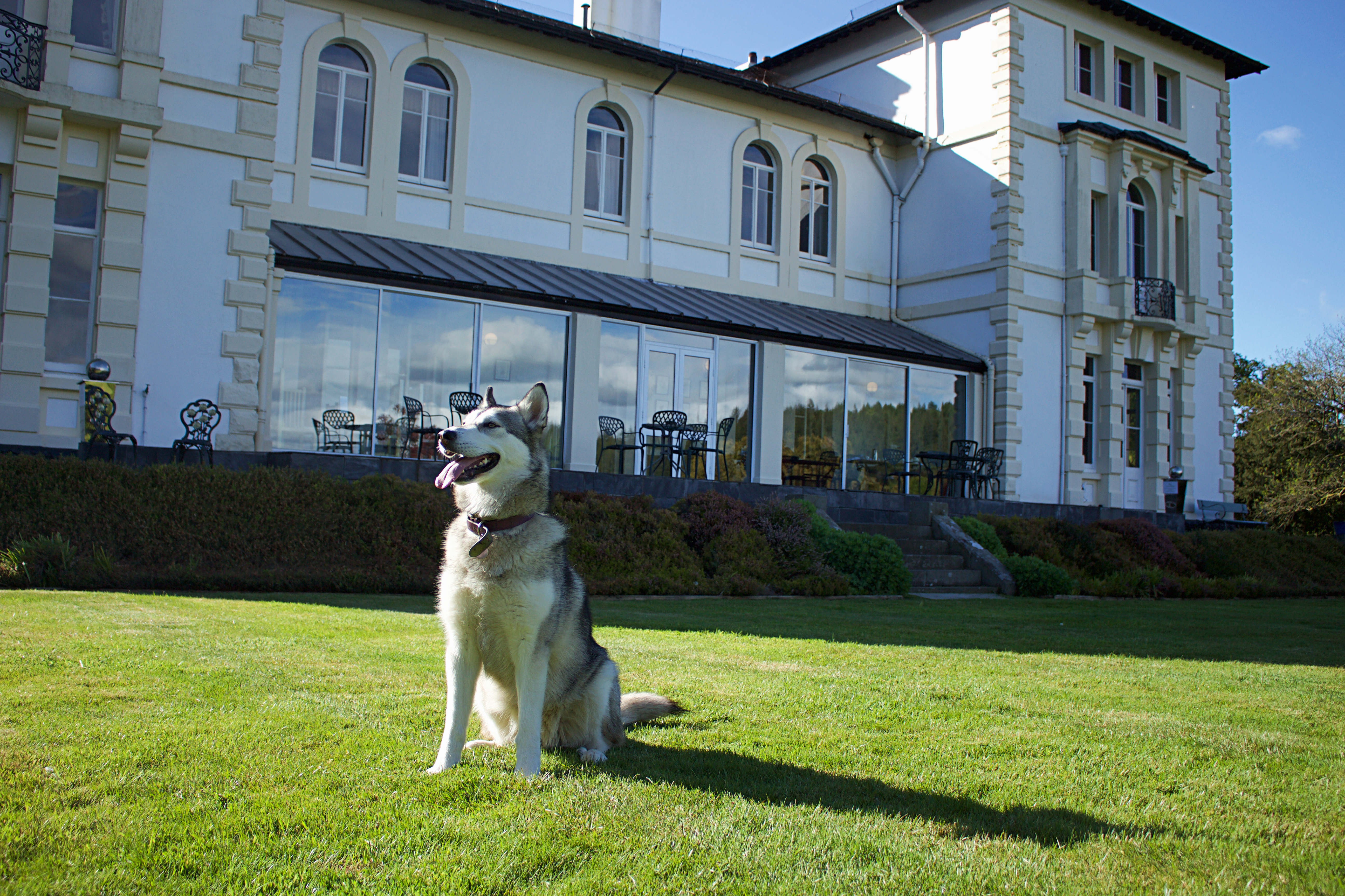 Pets welcome at The Falcondale