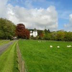 Falcondale and Sheep