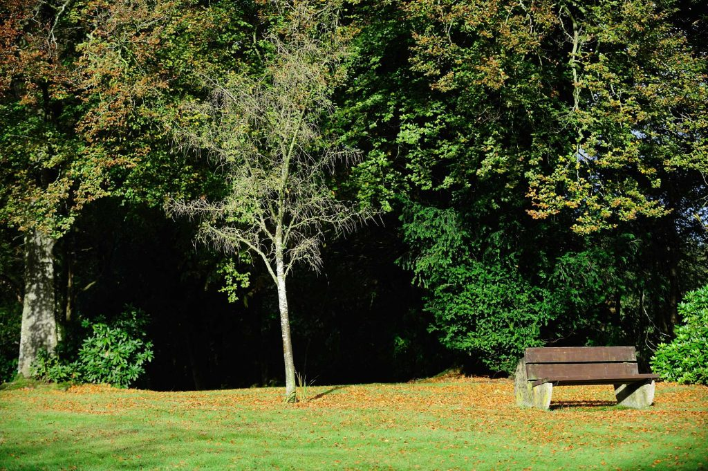 Autumn at The Falcondale