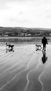 Walks in Newport whilst staying at The Falcondale Hotel, Ceredigion
