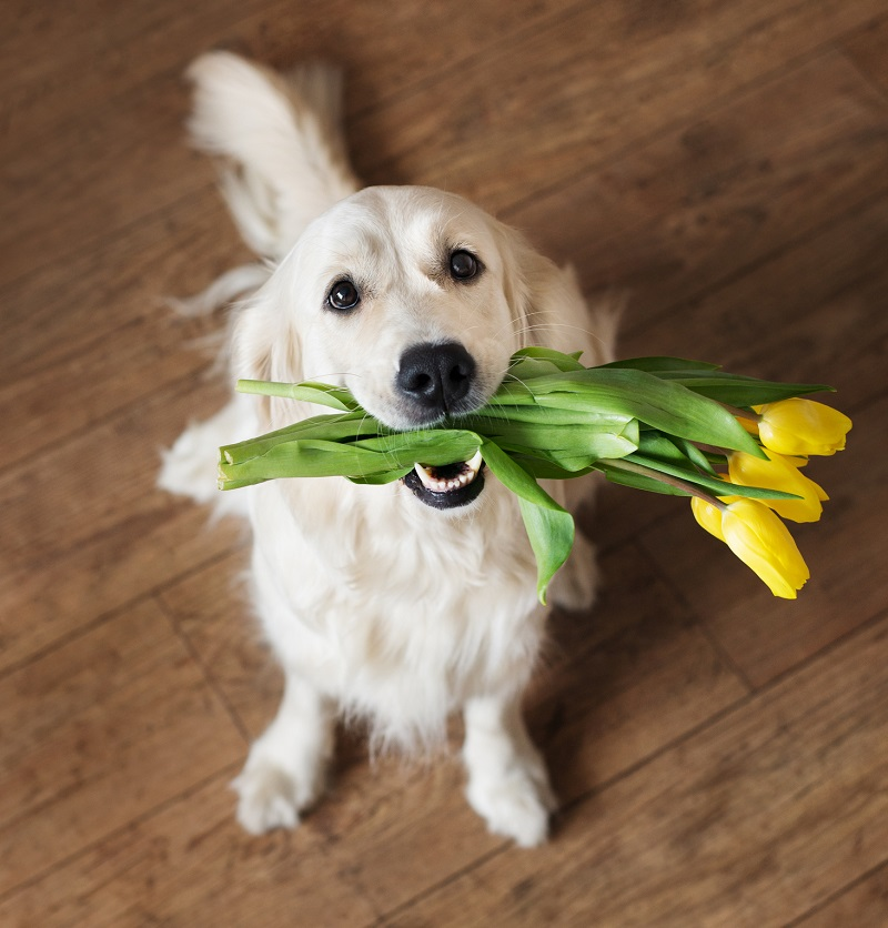 A well-trained dog can act as a flower girl for your wedding