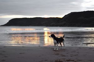 Find a dog-friendly hotel with plenty of opportunities for walking, preferably with a dog-friendly beach nearby.