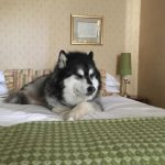 The little things that can make a big difference when you are looking for a dog-friendly hotel.