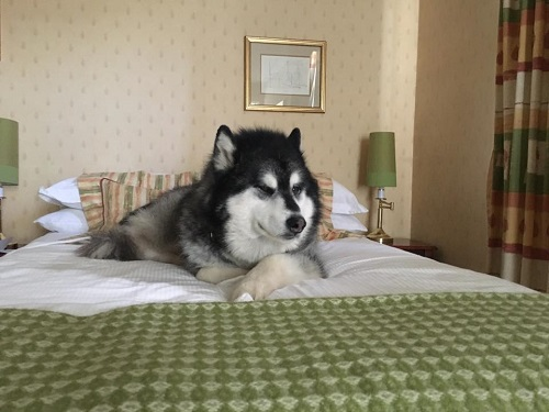 5 Tips for a Fantastic Dog Friendly Hotel Stay in Mid-Wales