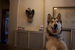 Dog stays at The Falcondale