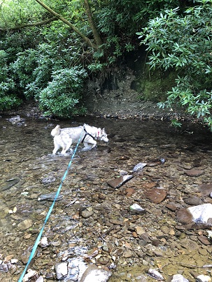 The Dog Blog- Dolaucothi Parkland Walk