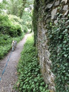 Dog walking in Dolaucothi pumsaint