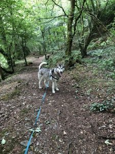 Freya walking in Dolaucothi