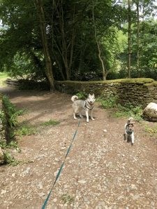 Dog walking in Dolaucothi