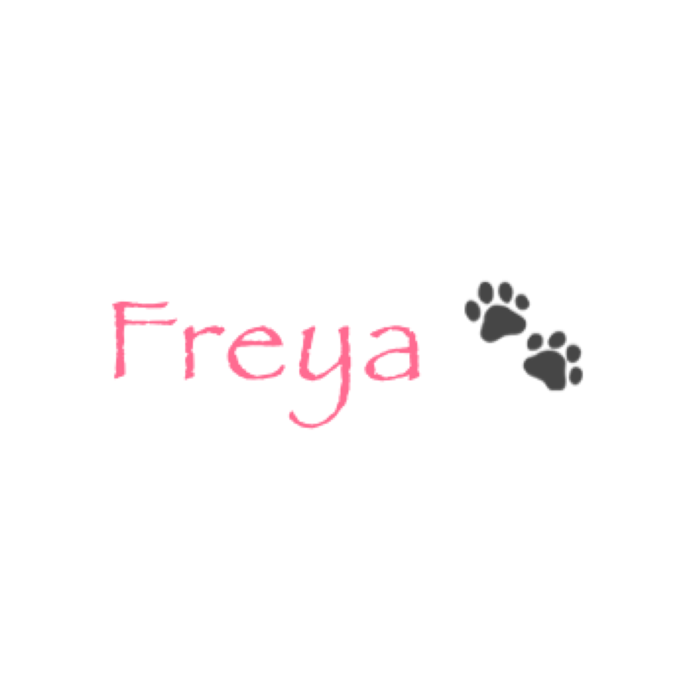 Doggie Days Out – Introducing Freya!