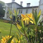 Yellow flowers at The Falcondale